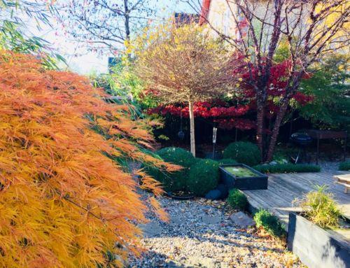 Höst i trädgårdsdesignerns egen trädgård