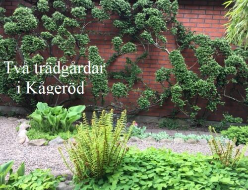 Två trädgårdar i Kågeröd