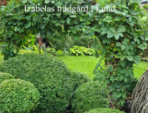 Izabelas trädgård i Lund