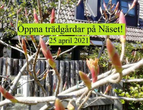 Öppna trädgårdar i Skanör och Falsterbo