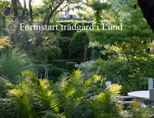 En formstark trädgård i Lund