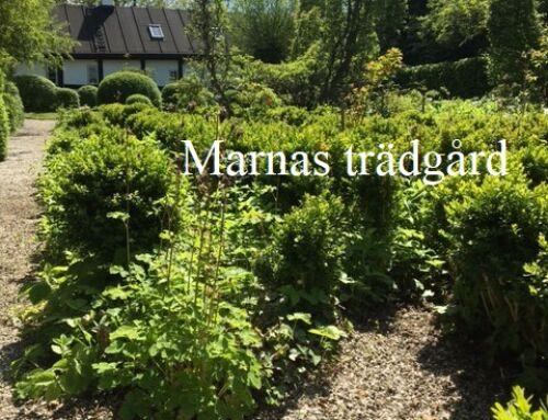 Volontärarbete i Marnas trädgård